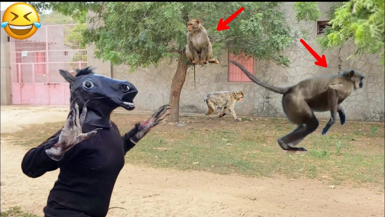 Fake small gorilla vs Monkey prank funniest dogs scared try to not laugh boom fun tv