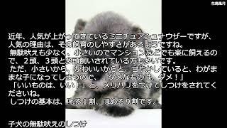 スタンダード・シュナウザーを苦労の末に小型化した犬種です。もともと...