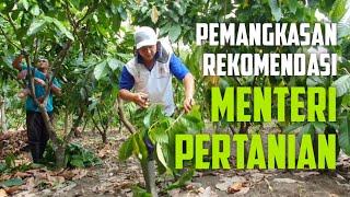 Download Lagu Tahapan Pemangkasan Kakao Agar Berbuah Lebat mp3