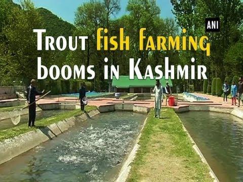 Trout Fish Farming Booms In Kashmir - Jammu And Kashmir #News