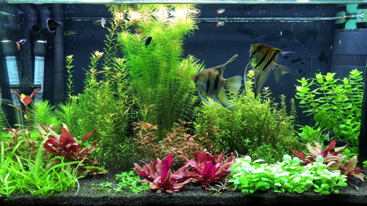 149 Zmiana W Oświetleniu Chihiros Led A801 Aquael Leddy Slim Plant Akwarium Roślinne