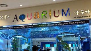 Seoul Coex Aquarium /  코엑스 아쿠아…