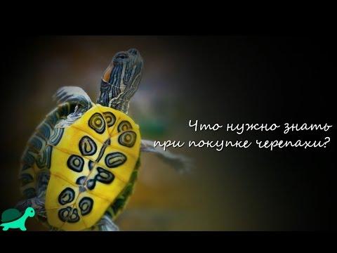 Что нужно знать при покупке черепахи?/What You Need To Know When Buying A Tortoise?