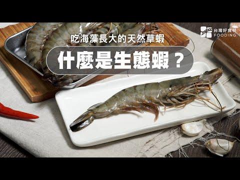 【餐桌上的肉蛋魚】什麼是生態蝦?吃海藻長大的天然草蝦