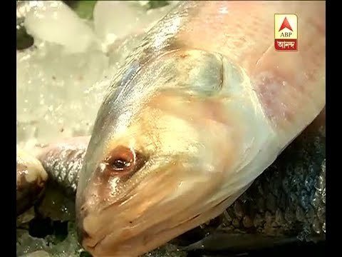 In spite of huge availability of Hilsa in the market, prices of large size hilsa is still