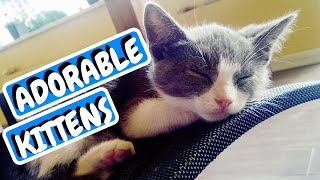 Cutest Cats | Cute Kittens | Cat Compilation
