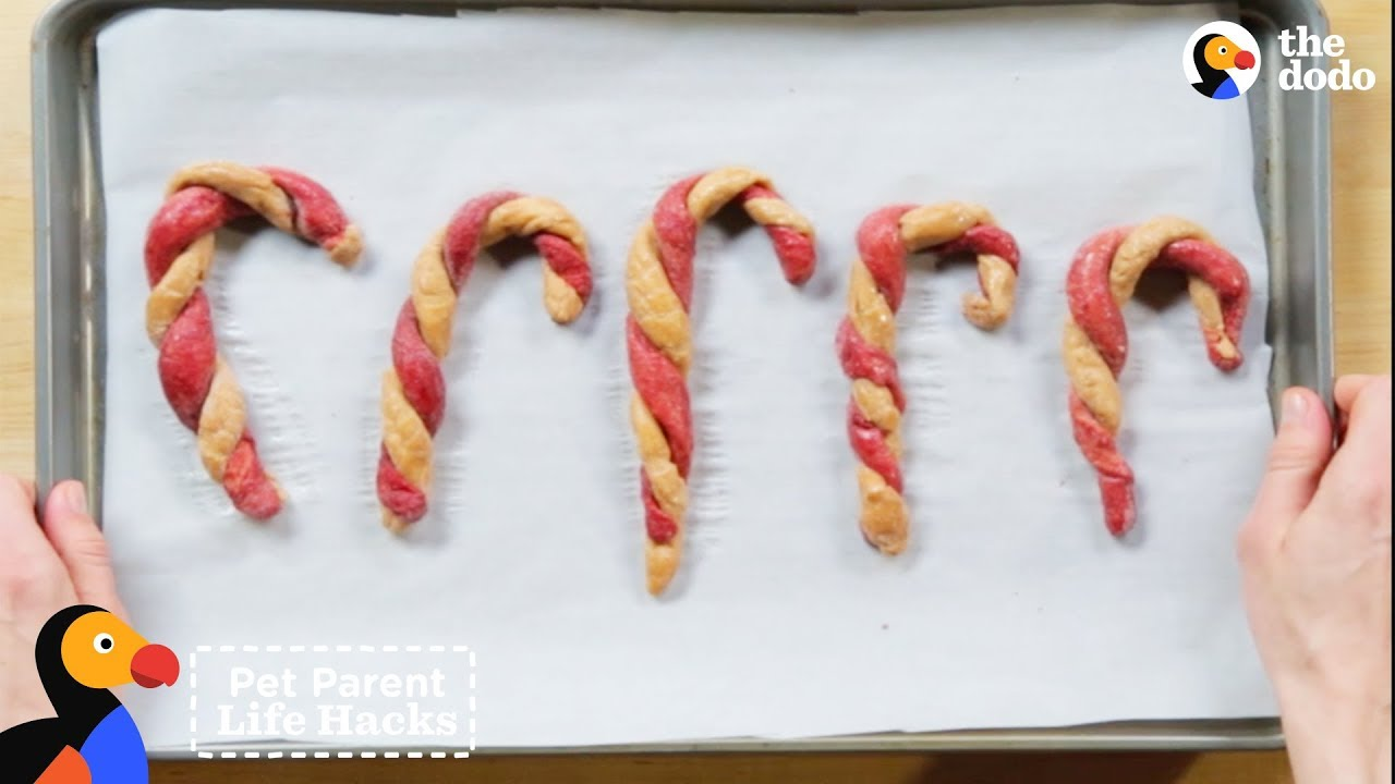 DIY Dog Candy Canes: Rescue Dogs Sample Holiday Treats