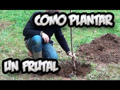 Como plantar un arbol frutal vergel organico la for Viveros de arboles frutales en chihuahua