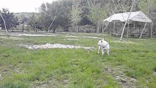 At a dog run in Aich Prefecture. 愛知県のドッグランにて。 http://ww...