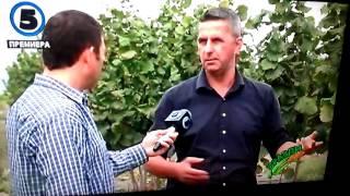 Italijanski nasad na Lesnik Sase na brazdi 2015 Италијански садници на лешник