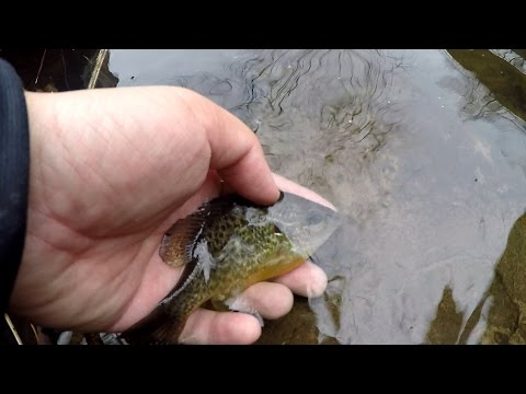 Winter Creek Fishing For SMALL Fish (Yardley, PA)
