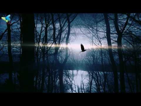 Good Night Images | Beautiful Good Night Video