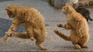 КОТЯТА #Котята зажигают