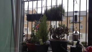 Short Video Blog - Balcony Bird Feeding And Gardening