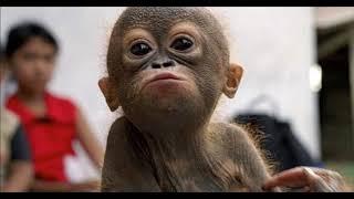 Подборка приколов с обезьянами 2019 HD