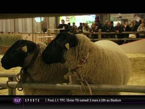 Salon de l 39 agriculture les concours d 39 animaux toulouse youtube - Salon des animaux toulouse ...