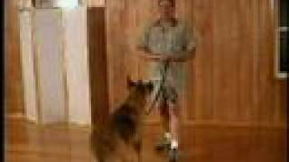 Dog Training - Train Your Dog To Sit, Down, Stand