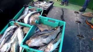 Морская рыбалка (Магадан)(Магадан, Бухта светлая., 2015-08-11T23:28:10.000Z)