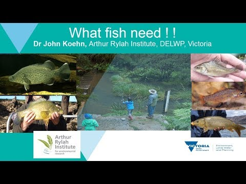 NFF2017: 01 What fish want (need!)