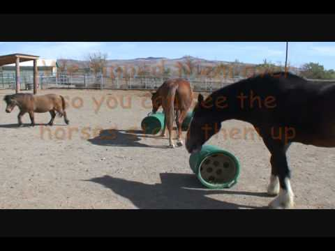 challenge feeders wiki slow feeder challenging hay horses paddock horse paradise for page