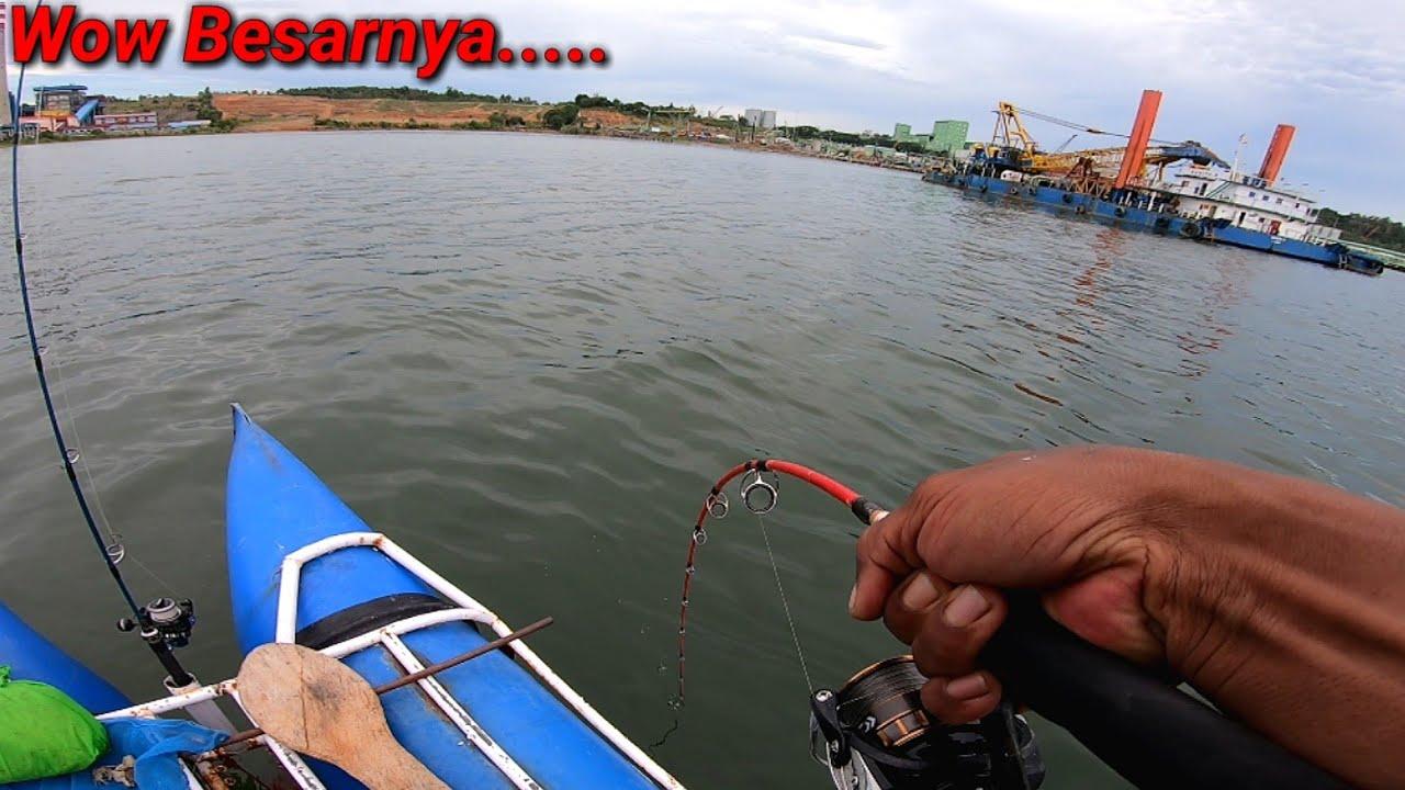 Saking Seringnya Dapat ikan ini, Baru Sekarang Dapat Yg Paling Besar