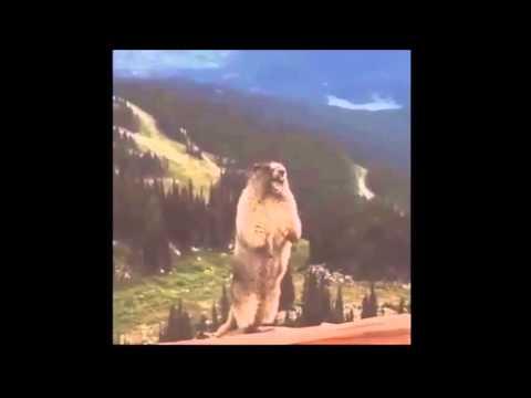 Самое Смешное Видео Красная Шапочка и Сурок