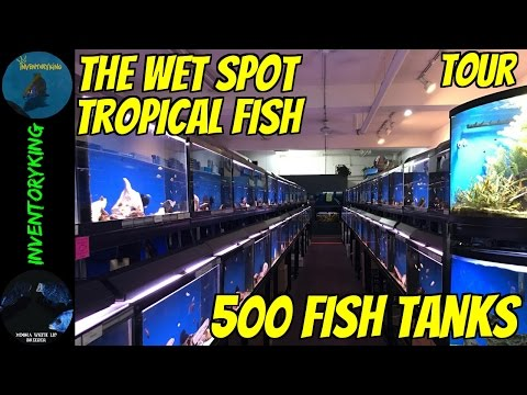 500 TANKS | Fish Store Tour | Fish TONS Of Fish | The Wet Spot Tropical Fish | Largest On West Coast