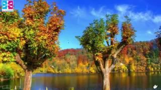 Pan Flute Instrumental Music for Harmony