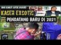 Kacer Excotic Pendatang Baru Di Wal Tahun   Mp3 - Mp4 Download