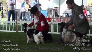 Show Dog  Cocker Ingles - Town Of Grimsby Liver Blaze Bayley   Cbkc   Maio 2012 Hdd