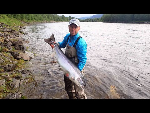 Salmon fishing on the Gaula river 2017 - Atlantic salmon 110 cm. 13,880 kg.
