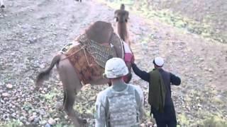 Смешное видео: верблюд