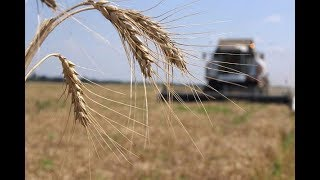 Сбережение денег и обучение  Канадцы взялись за украинских аграриев