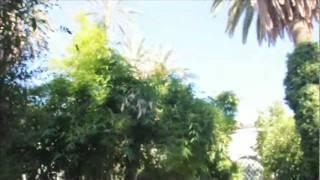 wah wah  - jimmy page and robert plant