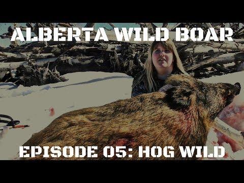 Hog Wild: Alberta Wild Boar Hunting