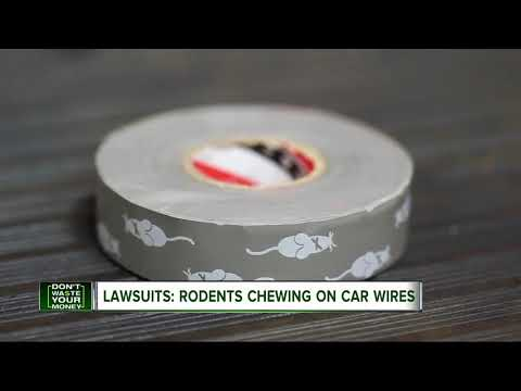 Beware Of Rodents Chewing Your Car's Wires