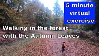 Short Virtual Walk for exercising - 5 minutes through the forest in the Autumn