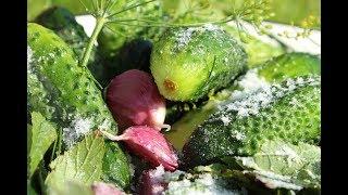 Рецепт советской кухни - маринованные огурцы!Recipe Soviet cuisine - pickled cucumbers!