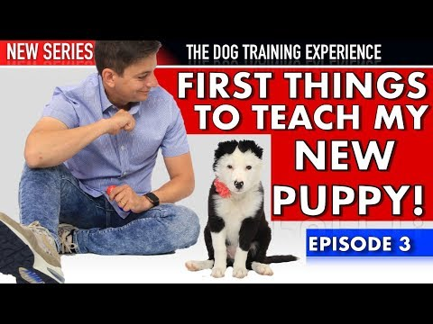 The First Things Im Teaching My New Puppy! (NEW SERIES: Dog Training Experience Episode 3)