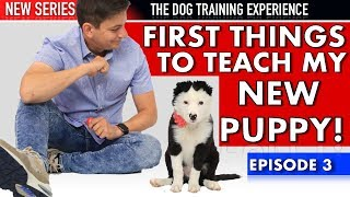 the-first-things-i-m-teaching-my-new-puppy-new-series-dog-training-experience-episode-3