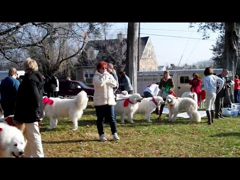 How to Train a Great Pyrenees Dog - Dog Obedience Training