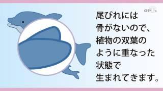ホスピ太Dr.倶楽部2013年11月号医療情報動画(#1/7)です。 http://www.op...