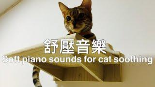 收藏貓減壓減焦慮寵物音樂放鬆心情催眠曲比貓草更減壓的方法人失眠也可以聽的音樂猫をなだめるための柔らかいピアノの音 Soft piano sounds for cat soothing