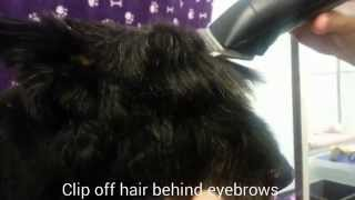 Dog Grooming Tips - Scottish Terrier Face Shaping