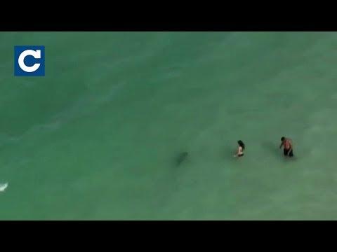 Батько‑фотограф та його дрон врятували трьох дітей від щелеп акули