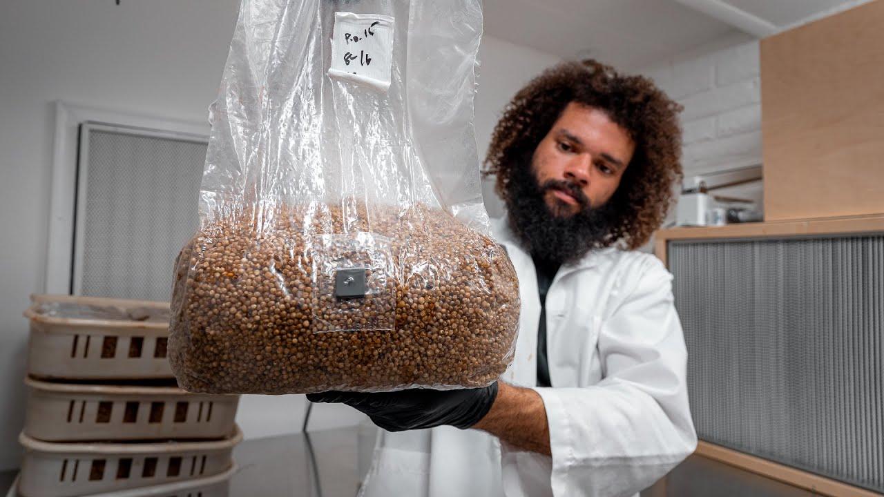 80 Bags of Autoclave Sterile Grain Spawn | Southwest Mushrooms