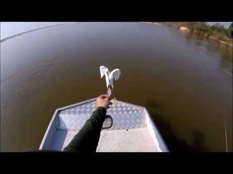 Pescaria Rio Araguaia - Garça comendo na mão - Luiz Alves - GO - outubro