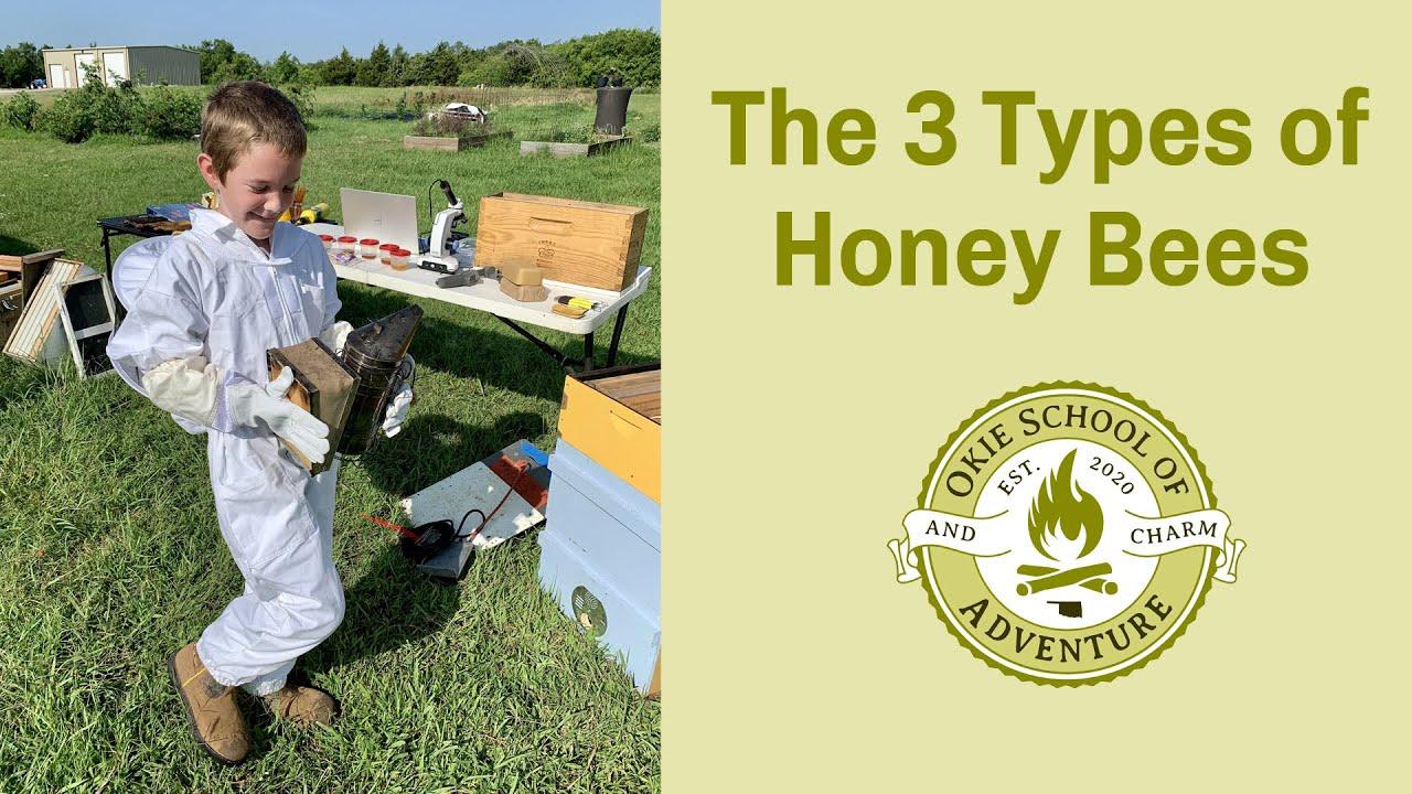 Download The Three Types of Honey Bees - Okie School of Adventure