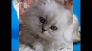 Картинки няшных котят: няяяяяяя