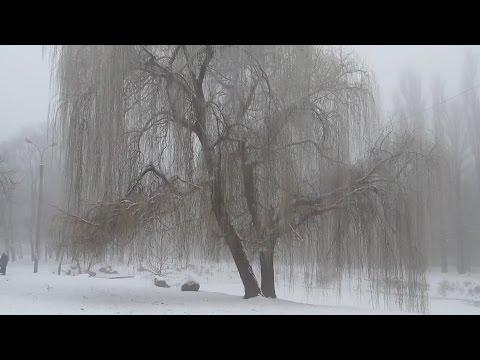 Туман. Зима. Город в тумане. Красивые деревья. Fog. Winter. The city is in a fog. Beautiful trees.